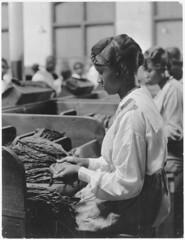 Anglų lietuvių žodynas. Žodis tobacco-plant reiškia n bot. tabakas lietuviškai.