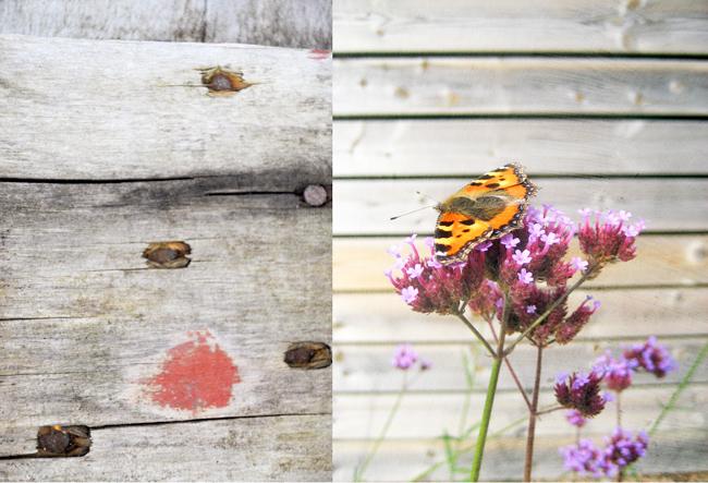 fjäril & verbena