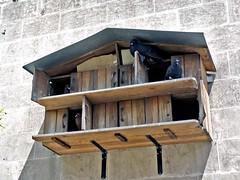 Pigeon Loft (Grete Howard) Tags: turkey muslim islam religion sanliurfa urfa mosque rizvaniye rizvaniyemosque