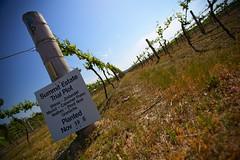 Granit belt's wineries (Glashenka) Tags: blue red sky summit shiraz merlot pinotnoir malbec cabernet whine cranache zinfandei