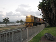 Train on The Strand in Tauranga 1