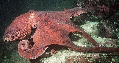 photo from www.marinebio.com