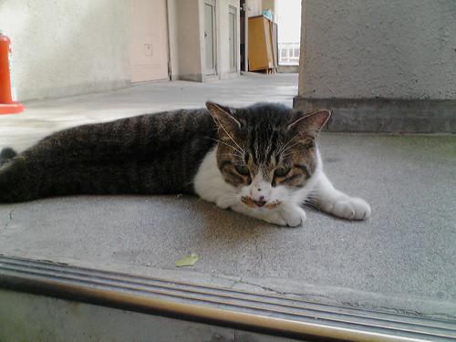Cat_2009-10-13