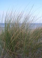 (R. DJ.) Tags: vakantie nederland zee ameland lucht duinen blauwe zand