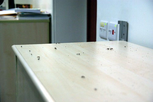 Ants from my AC