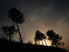 Ts_Silhouette (Amit Bhardwaj_Dilli) Tags: eve trees sunset india mountains evening asia walk hills silhoutte himachal himalayas eveningwalk bharat himachalpradesh southasia northindia hindustan solan juit waknaghat unseenindia jaypeeuniversity dpssilhouettes