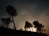 Ts_Silhouette (Amit Bhardwaj_Dilli) Tags: eve trees sunset india mountains evening asia walk hills silhoutte himachal himalayas eveningwalk bharat himachalpradesh southasia northindia hindustan solan juit waknaghat unseenindia jaypeeuniversity dpssilhouettes