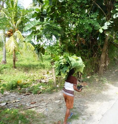 Flores-Maumere-Moni-Route (37)