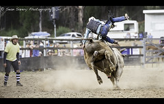 Camera Shy (Sean Savery Photography) Tags: sony clown australia bull tasmania rodeo midair tamron a99 gowriepark tamron70200mmf28divcusd gowrieparkrodeo2014