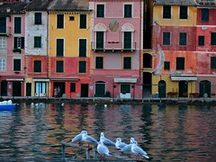 Seagull in portofino (klausthebest) Tags: sea italy house colour reflection italia searchthebest seagull liguria portofino italians worldbest holidaysvacanzeurlaub theunforgettablepictures theperfectphotographer themonalisasmile