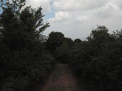 The path less taken (g.shivnarayan) Tags: coorg madikeri thandiyandamol
