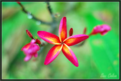 Flowers - Botanical Garden
