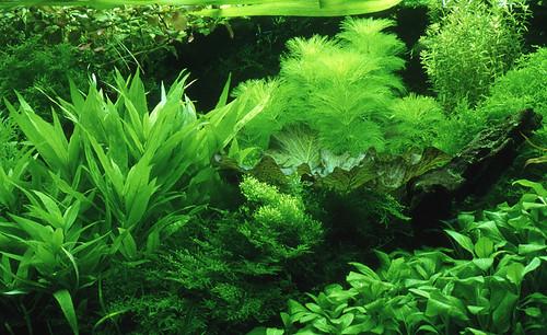 Planted Dutch Aquarium 1 by Martien & Alpha.