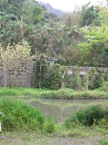 士林官邸-生態區