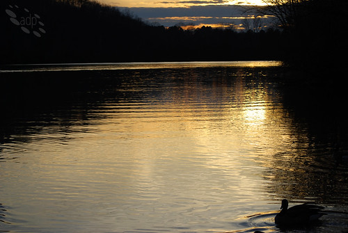 ADP_Chattahoochee_Sunset[2009]