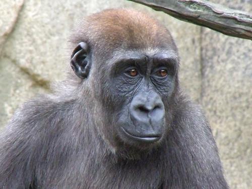 Bakari, at 3, is losing his childlike characteristics.