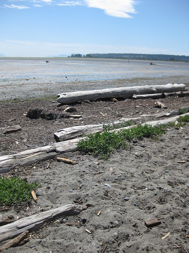 Beach Rambles Boundary Bay