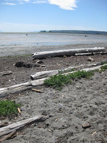 Beach Rambles Boundary Bay