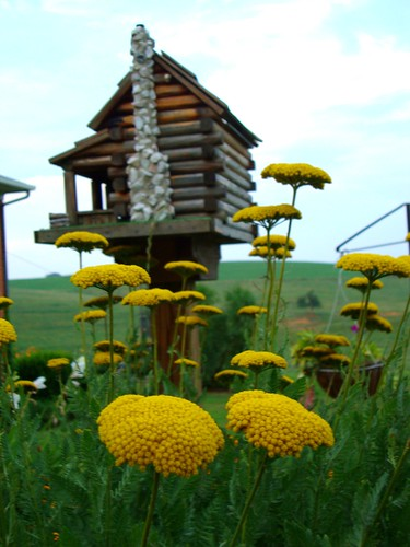 Yellow Flowers and Birdhouse 2