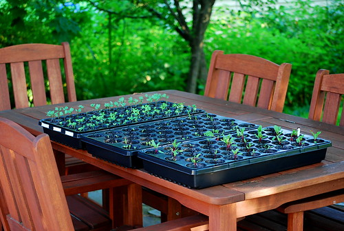 Seedlings on table