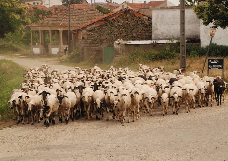 Sao Vicente da Raia 015