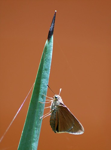 Triad... Moth, Point of Century Agave and Spider Web