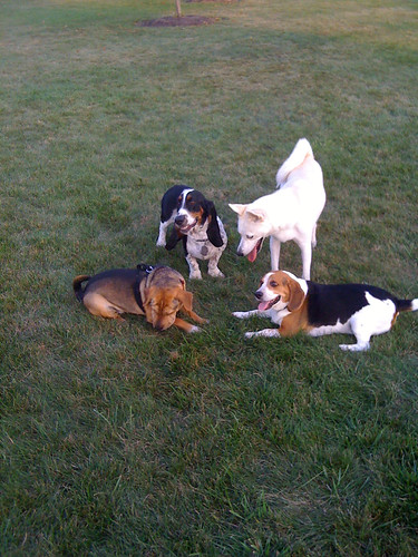 Laney, Sandy, Kaya, and Baxter