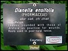 Metal plant ID tag for herbal plant, Dianella ensifolia