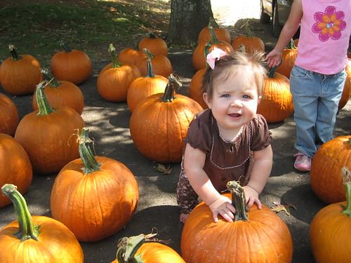 Campbell - Pumpkin