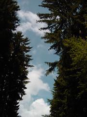 Hiking - Bbrach (haegar52002) Tags: himmel 2009 bumen bbrach derblaue zwischenhohen