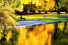 On golden pond (Steve-h) Tags: trees ireland dublin orange brown sun man green water grass sunshine youth canon gold grey harmony benches railings duckpond ststephensgreen ongoldenpond steveh picturepoems mywinners mywinner canoneos500d platinumheartaward spiritofphotography beautifulshot doubledragonawards canonf28100mmusmmacro theawardfactory platinumpeaceaward