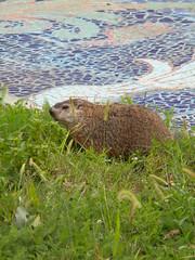03 (Jenny Harned Tabrum) Tags: pa groundhog braddock rankinbridgeproject