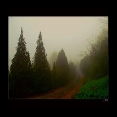 Morning Fog (Osvaldo_Zoom) Tags: morning autumn trees mist cold fog landscape nikon solitude country marche humidity lonliness macerata moist d80 jjjohn landscapeshroudedinmist