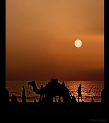 Activity at the Beach.... (aroon_kalandy) Tags: light sunset sea orange india seascape reflection beach nature beauty yellow photoshop landscape creativity evening adobephotoshop artistic sony awesome kerala camel fantasy greatshot impressions lovely dslr majestic naturelovers calicut sihloutte supershot topshots beautifulshot anawesomeshot sonydslra200 malayalikkoottam thesuperbmasterpiece aroonkalandy