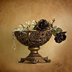 Vase (Hamad Al-meer) Tags: life lighting wallpaper stilllife brown flower art wall studio gold golden still www vase hamad grungy حمد almeer المير hamadhd hamadhdcom wwwhamadhdcom