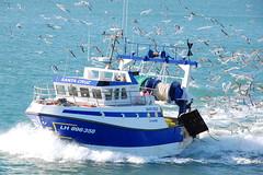 SANTA CRUZ (LeHavreShips) Tags: sea sun france port boat photo fishing view ships vessel normandie normandy pilot lehavre