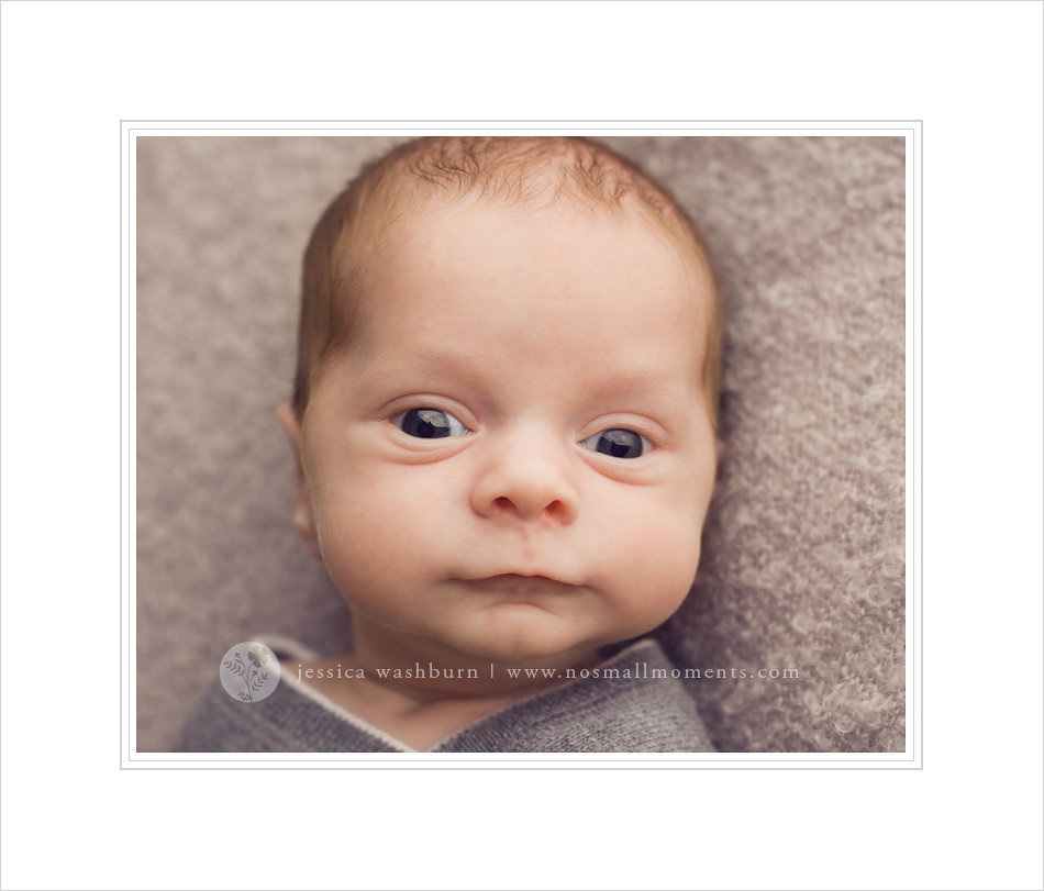 Albany-newborn-photographer