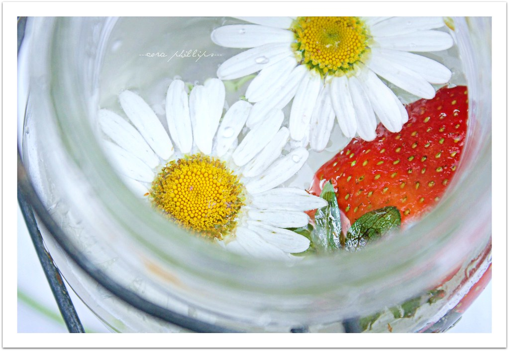 Daisies and Strawberry Splash