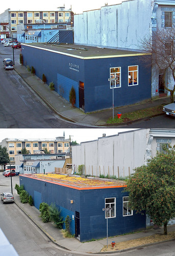 greenroof on the blueberry building | before & after