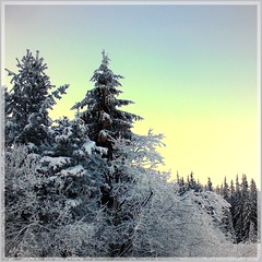 Snow poetry (Stella VM) Tags: winter snow tree bulgaria vitosha        theunforgettablepictures overtheexcellence