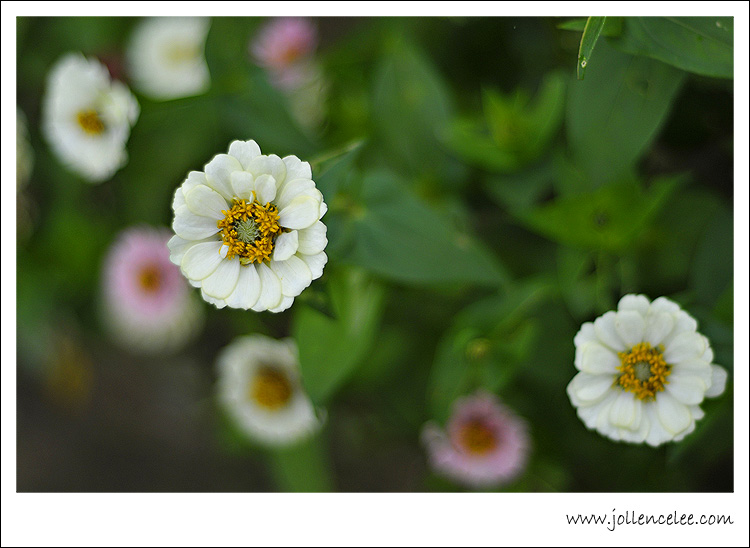50mm f1.8 flower photos