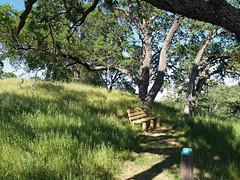 2008 04-13 Mt Wanda trail 6 bench (pjink11) Tags: california trees olympus 2008 martinez hikes springtime e500 zd1445mm mtwanda johnmuirnhs