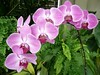 Tagged!     (Explore #112/Jan 17) (ighosts) Tags: flowers me stream purple orchids tag tagged present 16 past naturesfinest anuniverseofflowers ighost ivebeentagged 16randomthings ighosts