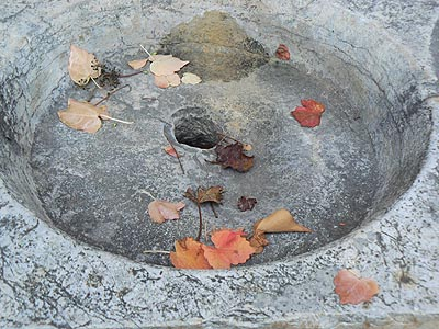 feuilles mortes.jpg