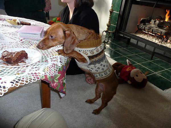 pennie the bandit