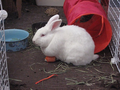 gus and carrot 3