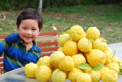 need lemon recice