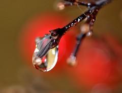 effetto lente (paolo-55) Tags: goccia gocce colorphotoaward theperfectphotographer goldstaraward