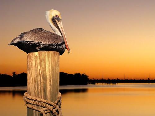 GrfxDziner.com | pelicanBay1
