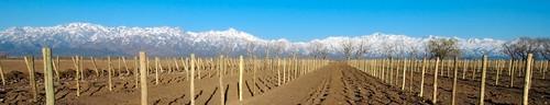 En fotos, The Vines of Mendoza